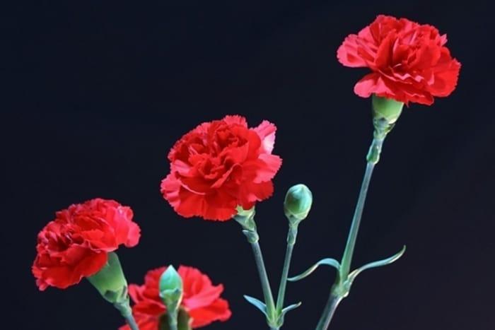 '카네이션' 색깔별 의미는? ⓒ 갓잇코리아