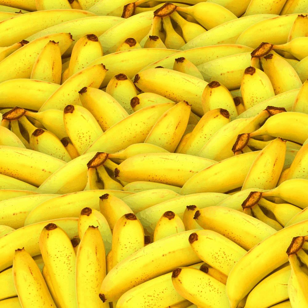 [이슈잇] '바나나 껍질' 그냥 버리긴 아까워...껍질 속 항산화 성분 비만 예방효과